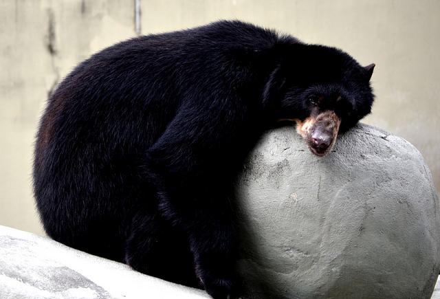 冬眠动物会在秋季在体内储存过量的能量以过冬Cflicker授权图片-大家