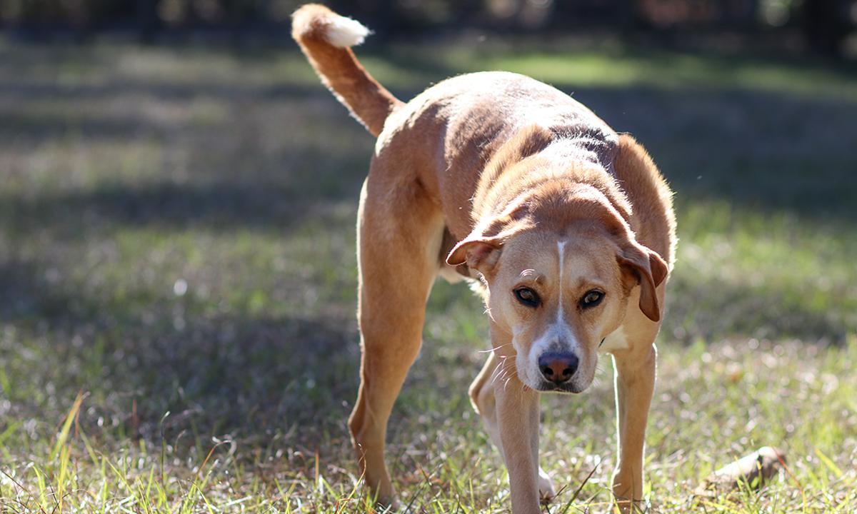 困境求生 被狗追怎麼辦?